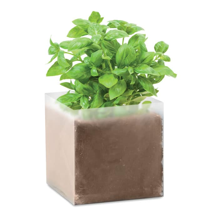 grown basil seeds in a box
