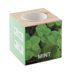 Mint (in wooden box)