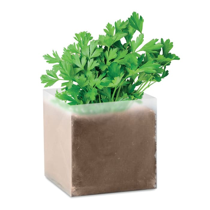 grown parsley seeds in a box
