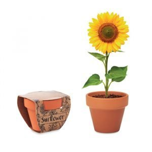 Small Clay Pot With Sunflower Seeds