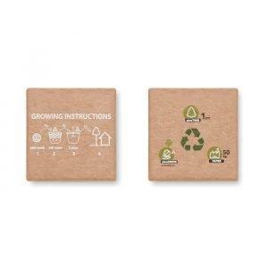 Wooden dice pine tree seeds