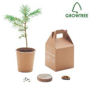 Growtree – pine seeds