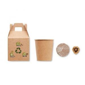 Pine tree seeds box